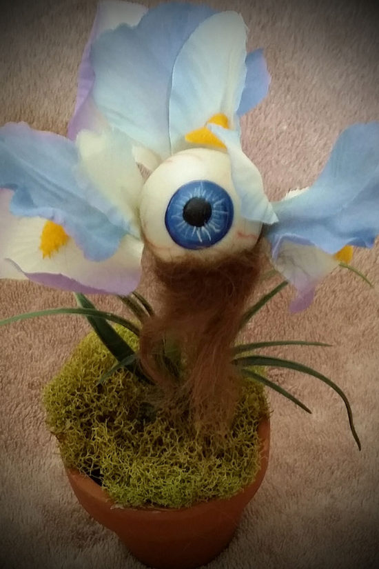 Bearded eyerus by Tina Parsons